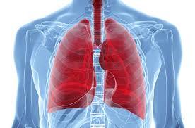 Туберкулез или рак легких как отличить Легкие