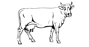 Cow Template Cow Template Arcgerontology Info