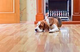 durable hardwood floors for dog owners