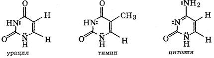 Нуклезоиды нуклеотиды и нуклеиновые кислоты Реферат Пиримидиновые основания