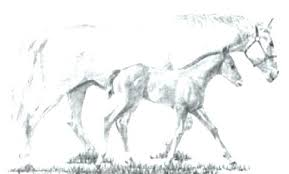 Horse Coloring Pictures Horse Coloring Pages Wild Horse Coloring