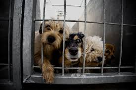 animal shelters sad. Exellent Sad There Are Millions Of Dogs In Shelters Waiting For Their Forever Homes An  Estimated 6 To 8 Million And Cats Enter Each Year Intended Animal Shelters Sad