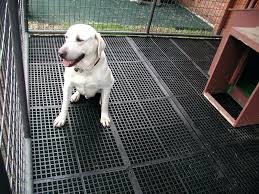 dog kennel flooring raised platform outdoor