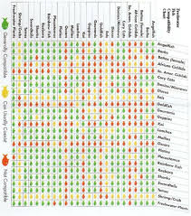 Fish Compatibility Chart Aquarium Fish Saltwater Aquarium