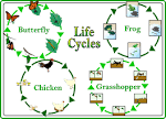 Image result for life cycles