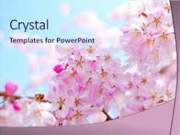 5000 Japanese Cherry Blossoms Powerpoint Templates W Japanese