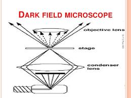 dark field microscopy define dark field microscopy dark field microscope dark field