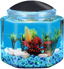 small screenshot 1 office fish. kollercraft 1 gallon hexagon betta fish aquarium with led lighting small screenshot office o