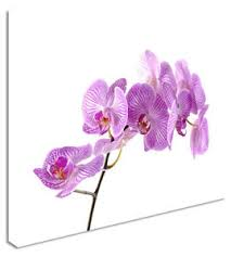 image is loading purple orchid floral flower canvas wall art picture  on orchid flower wall art with purple orchid floral flower canvas wall art picture large any