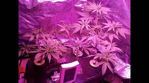 aerogarden ultra led weed grow. aerogarden ultra led aka \ led weed grow d