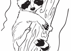 Small Picture Raccoon Coloring Pages Printables Educationcom