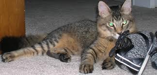 re my kitten won t stop ing on me