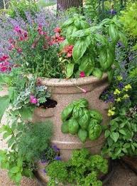 grow an entire herb garden at your