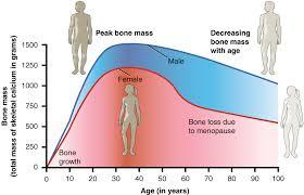 File 615 Age And Bone Mass Jpg Wikimedia Commons