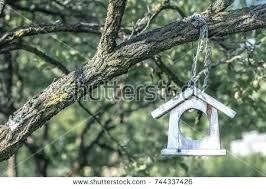 glass bird feeders handmade bird feeder empty wooden handmade bird feeder garden tree people helping animals