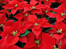 「12月 花」の画像検索結果