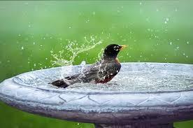 19 bird bath fountain ideas happy diy