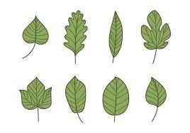 hojas verdes 347774 vector en vecy