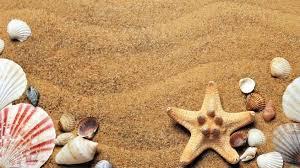 Resultado de imagen de caracolas marinas