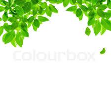 Green Leaf Border Design On White Stock Photo Colourbox