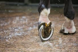 Equine Hoof Anatomy Lovetoknow