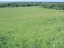 Луг Википедия Луговая растительность