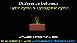 Lytic And Lysogenic Cycle Venn Diagram Difference Between Lytic And Lysogenic Cycle Of Bacteriophage