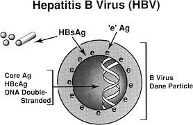 Hep B Diagnosis Chart Hepatitis B Diagnosis Prevention And Treatment Clinical
