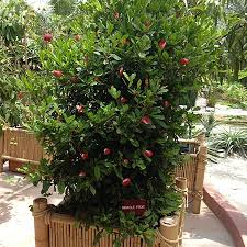Best Fruit Trees For Missouri  Nixa Lawn ServiceFruit Tree Sale Houston
