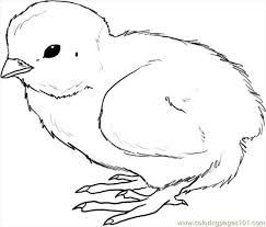 Small Picture How To Draw A Chick Step 4 Coloring Page Free Chick Coloring