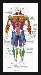 Your Body Your Muscle Muscularity