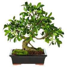 add a natural touch to your kitchen or home office with this faux potted bonsai tree add bonsai office interior