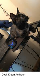 desk kitten and activate