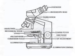 Substage Light Microscopy