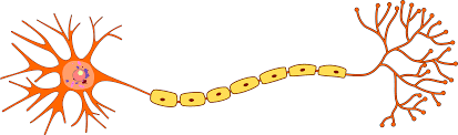 File Structure Of Neuron Png Wikimedia Commons