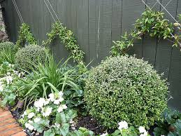 Small Picture 47 best Plants and trees images on Pinterest Landscaping