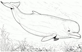 Small Picture Coloring Page Of A Shark Trendy Whale Shark Coloring Pages Whale