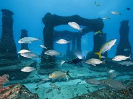 coral reef essay coral reef essay your sunscreen might be killing coral reefs in coral reef essay your sunscreen might be killing coral reefs in