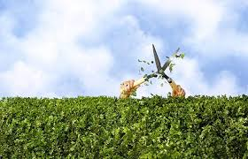 Image result for Hedge trimming