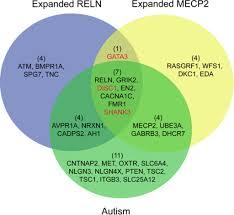 Venn Diagram Bioinformatics Venn Diagram Of Genes Associated With Autism Reln Rela Open I
