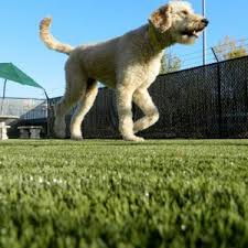 artificial grass for pets. Artificial Pet Grass In St. Louis For Pets