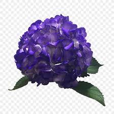 Hydrangea Color Purple Lavender Blue Png 900x900px