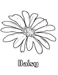 Small Picture Daisy Flower Coloring Pages Coloring Pages