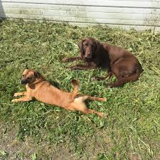 treehouse masters pete nelson daughter. Bun And Victor Working Hard In The Sunshine. Treehouse Masters Pete Nelson Daughter H