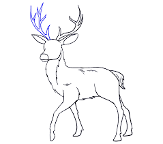 How To Draw A Deer In A Few Easy Steps Easy Drawing Guides
