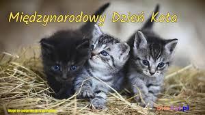 Znalezione obrazy dla zapytania: dzien kota
