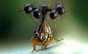 Resultado de imagen de El mundo de los insectos