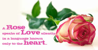 awesome love es hd wallpapers rose love es hd