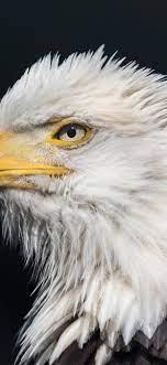 Eagles iPhone XS Max Wallpaper Download