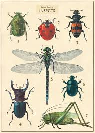 Cavallini Vintage School Poster Insect Chart